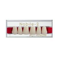 Dente Nobile-2 Anterior Inferior - Ruthinium