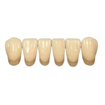 Dente Trisuper Anterior Inferior - Blue Dent