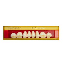 Dente Duo-Bon Posterior Superior - Ruthinium