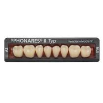 Dente SR Phonares II Typ Posterior Inferior - Ivoclar Vivadent