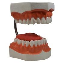 Macro Modelo Arcada Dentária - Medfio
